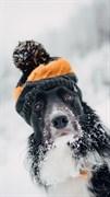 """Москитная сетка - """"Собака в шапке"""""""