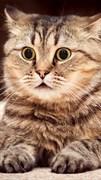 """Москитная сетка """"Удивленный кот"""""""