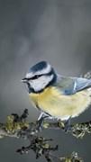 """Москитная сетка """"Синяя птица на ветке"""""""