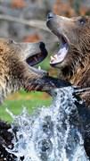 """Москитная сетка """"Медведь. Гризли"""""""