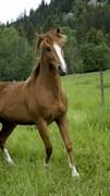 """Москитная сетка """"Лошадь в поле"""""""