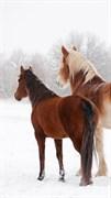 """Москитная сетка """"Лошади. Зима"""""""
