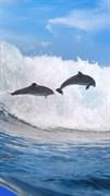 """Москитная сетка """"Дельфины в океане"""""""