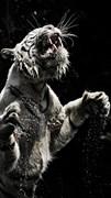 """Москитная сетка """"Белый тигр"""""""