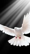 """Москитная сетка """"Белый голубь"""""""