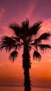 "Москитная сетка ""Пальмы закат. Красный"""