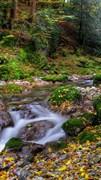"""Москитная сетка - """"Осень. Река в лесу"""""""