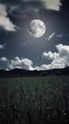 """Москитная сетка - """"Облака и трава"""""""